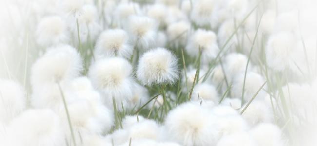 coton-douceur-force